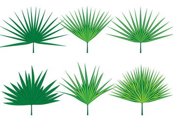 Palmetto Leaves Vectors - бесплатный vector #434579