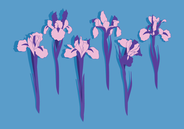 Iris Flowers Vector Free Vector Download 435029 Cannypic