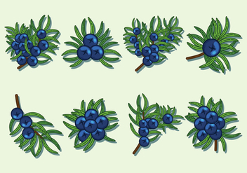 Juniper Berries Vector Icons - vector #435329 gratis