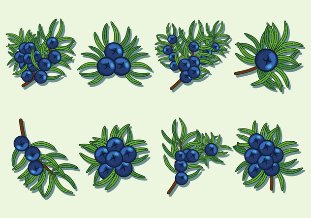 Juniper Berries Vector Icons - Free vector #435329