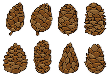 Set Of Pine Cones Vectors - Free vector #435379