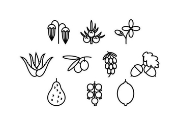 Free Medical Herbs Line Icon Vector - Free vector #435489