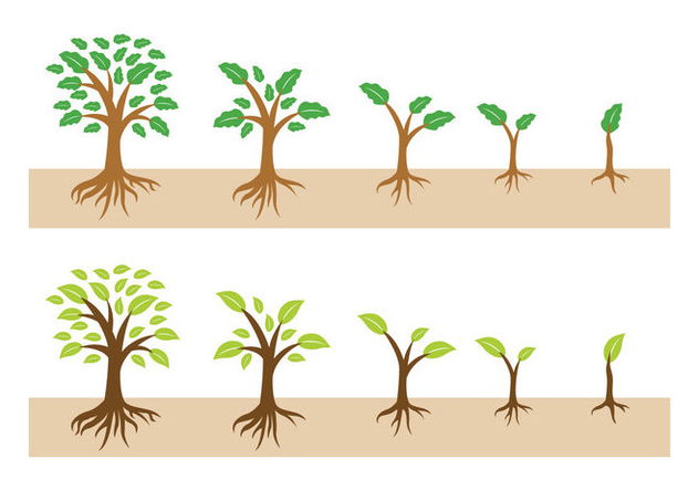Growing tree with roots Vector - Free vector #435609