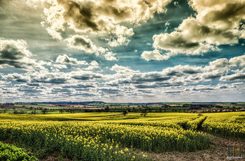 Fields of Gold - image gratuit #437749