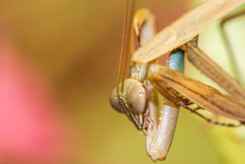 praying mantis - image gratuit #439049