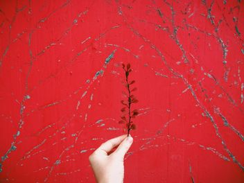 Branch with dry leaves in the hand over red background - image gratuit #439239