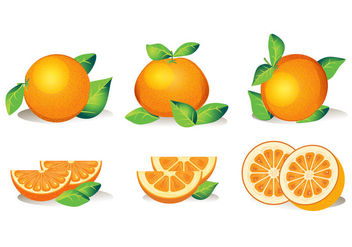 Set of Isolated Clementine Fruits on White Background - Kostenloses vector #439739