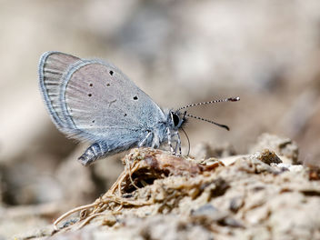 Small Blue - image #439959 gratis