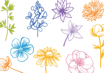 Free Wildflower Vectors - бесплатный vector #441479