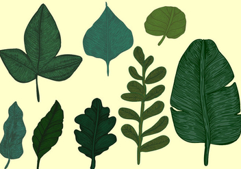 Vintage Style Botanical Leaves Vector Set - Free vector #442219