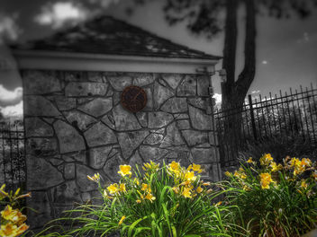 Daylily Color Splash - image gratuit #446549