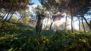 TheHunter: Call of the Wild / Oh Deer - image gratuit #446849