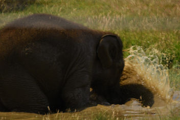 Baby elephant, playing. - Free image #447249