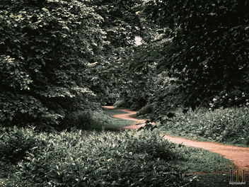 The Path through the Forest - image gratuit #447859