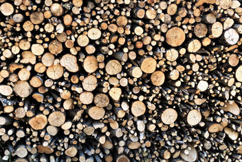 Pile of Wood - Free image #447969