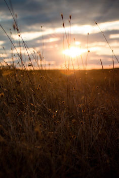 Sunset field landscape,Europe - image #448419 gratis