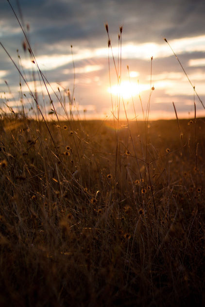 Sunset field landscape,Europe - Free image #448419