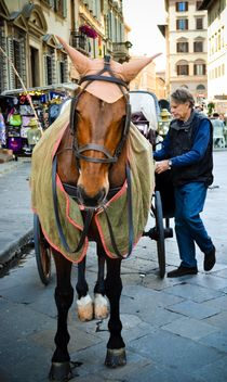 Horse-drawn carriage in Italy - image #449559 gratis