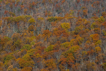 Autumn in Virginia - Free image #450269