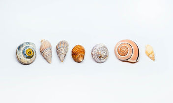 Group Of Sea Shells On white Background.jpg - бесплатный image #450409