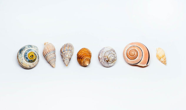Group Of Sea Shells On white Background.jpg - Kostenloses image #450409