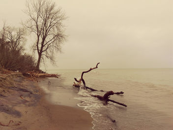 Point Pelee - East Beach - Free image #450859