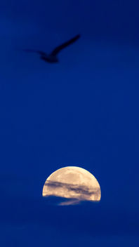 Silhouette of a bird in the sky above the full moon - image #451079 gratis