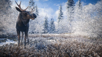 TheHunter: Call of the Wild / Hello Mr. Moose - image #452109 gratis