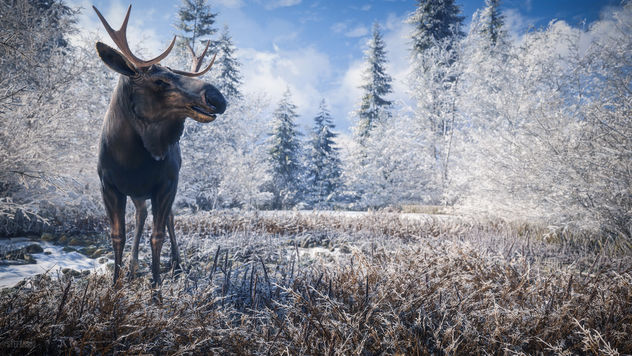 TheHunter: Call of the Wild / Hello Mr. Moose - image gratuit #452109