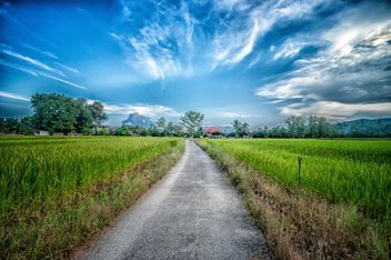 Rice fields under blue sky, Chiang mai, Thailand - бесплатный image #452429