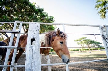 Brown horse on farm - Free image #452529