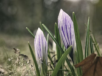 20180327-141414 - Flower Nature Bokeh - image #453009 gratis