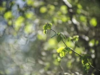 20180421-162246 Spring Green Nature Bokeh - бесплатный image #453489