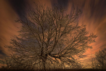 A tree in the evening - image gratuit #453539