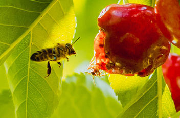 Save the bees.jpg - image gratuit #454499