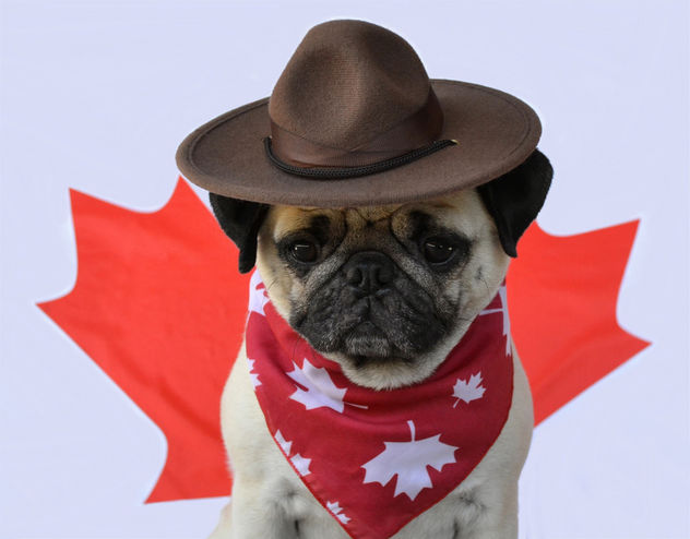 Happy Canada Day! - Free image #454799