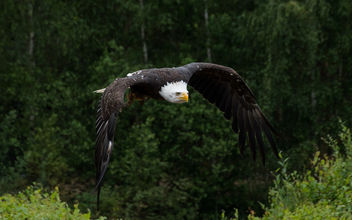 Eagel has almost landed - Free image #454809
