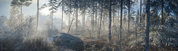 TheHunter: Call of the Wild / Misty Morning - Free image #455199