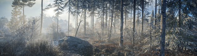 TheHunter: Call of the Wild / Misty Morning - image gratuit #455199