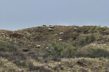 Sheep - image #456179 gratis