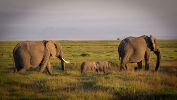 In memory of one of the rare Elephant Twins, who died this week. Amboseli National Park - Free image #456879