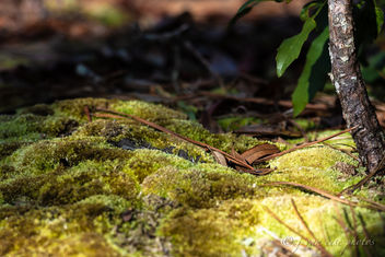 Forest Floor ~ Southern Outer Banks, North Carolina - Free image #456959