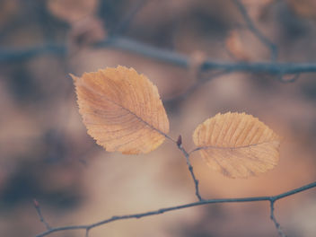 Before the leaves leave - бесплатный image #457549