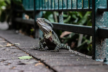 City Lizard - image #457769 gratis