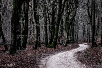 Into the Woods - Free image #458009