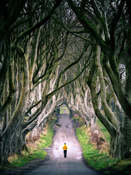 The Dark Hedges - Northern Ireland - Travel photography - Free image #458139