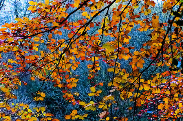 DSC_4453-2 autumn - colorful leaves - Free image #458179