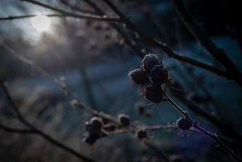 Frozen Morning - image gratuit #458239