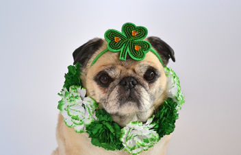 Happy St. Patrick's Day! - image gratuit #459759
