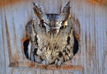 My First Ever Owl Sighting! - Free image #460299